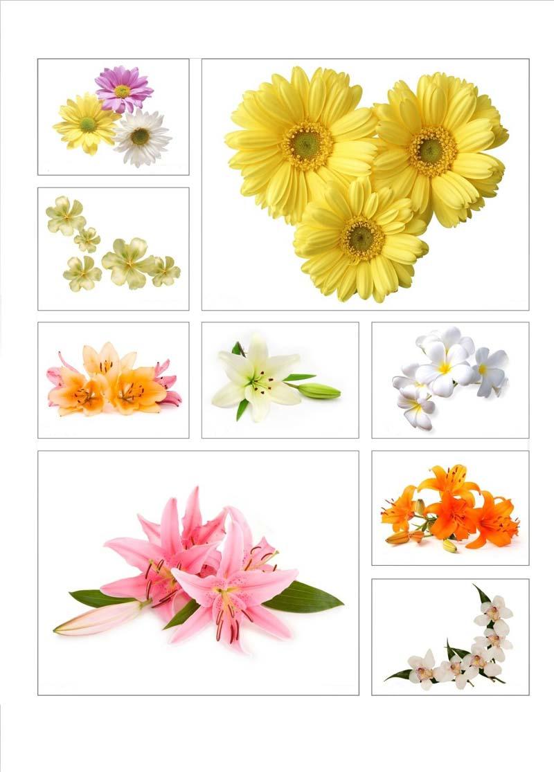 Арт печать с изображением цветов всегда придаст вашему помещению ощущение праздника,тепла летнего солнца и просто хорошего настроения