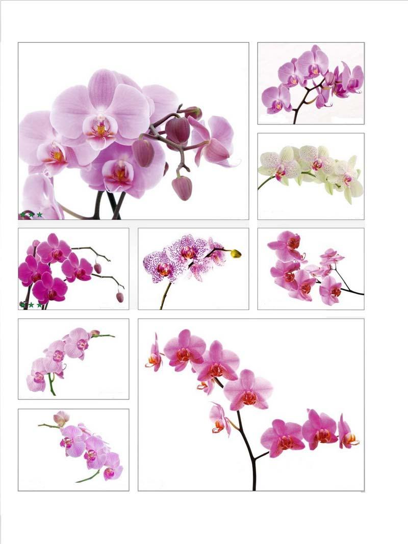 Орхидея- символ совершенства и гармонии, а так же отличное решение для придания законченности вашему романтическому стилю интерьера